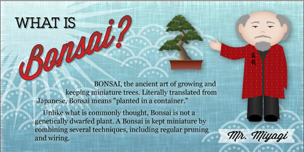 bonsai-infographic-thumb