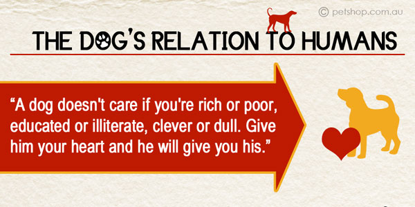 Dog's Relation To Humans Infographic