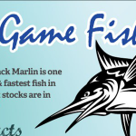 The Decline of the Black Marlin