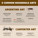 Five Common House Ants Infographic