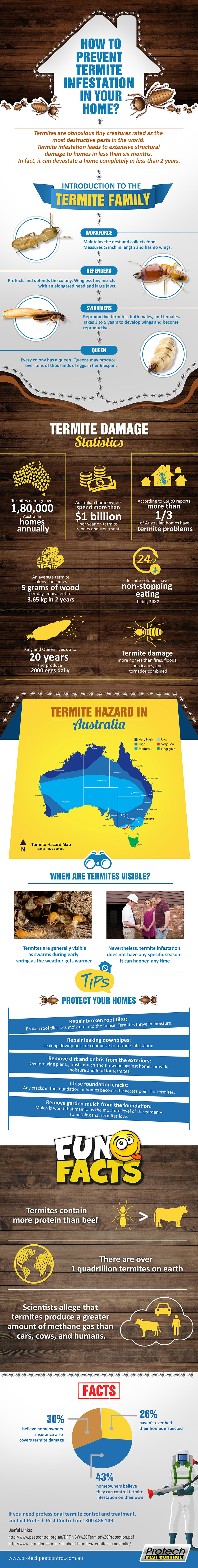 How To Prevent Termite Infestation In Your Home? infographic
