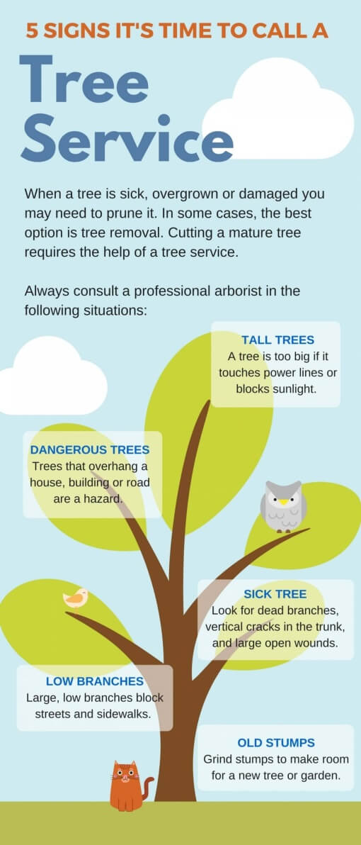 5 Signs that you need to call a tree services company