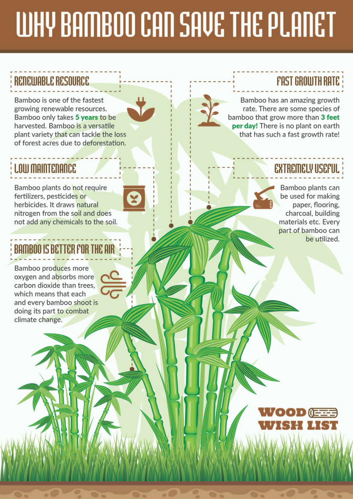 Why Bamboo Can Save The Planet Infographic